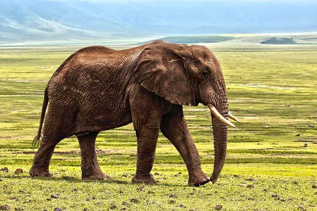 elephant-1421167_640